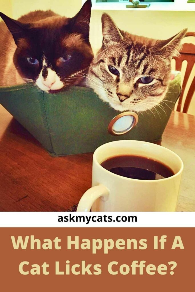 What Happens If A Cat Licks Coffee?
