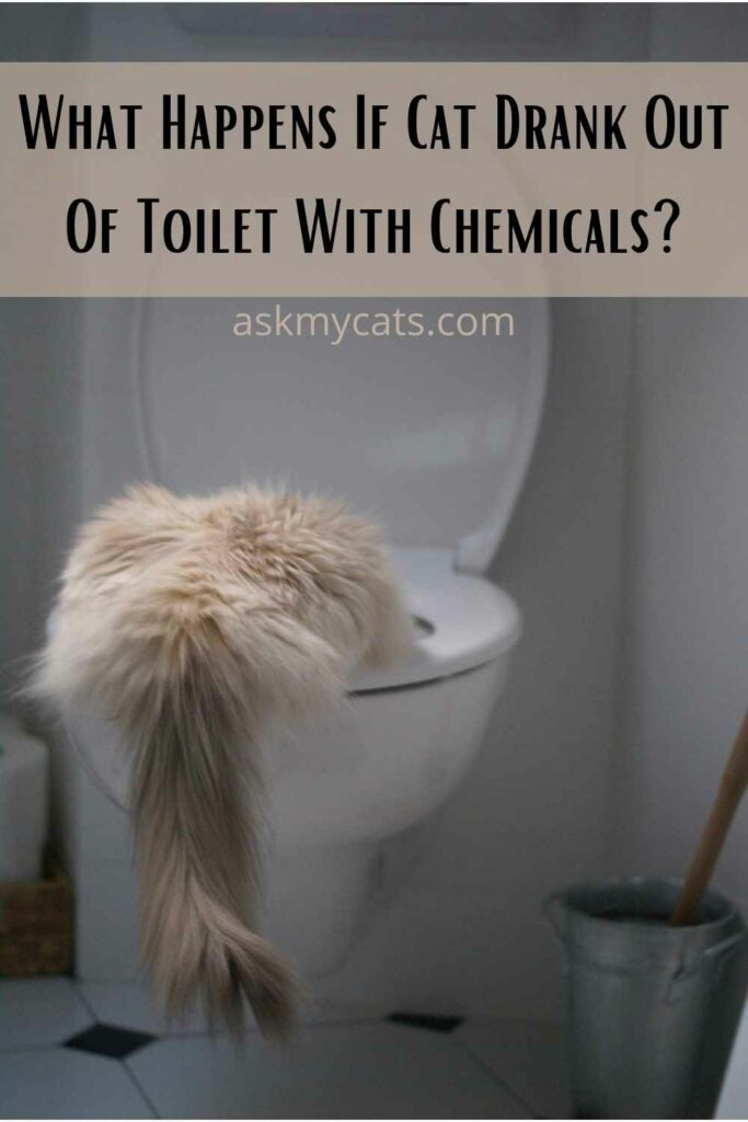 What Happens If Cat Drank Out Of Toilet With Chemicals?