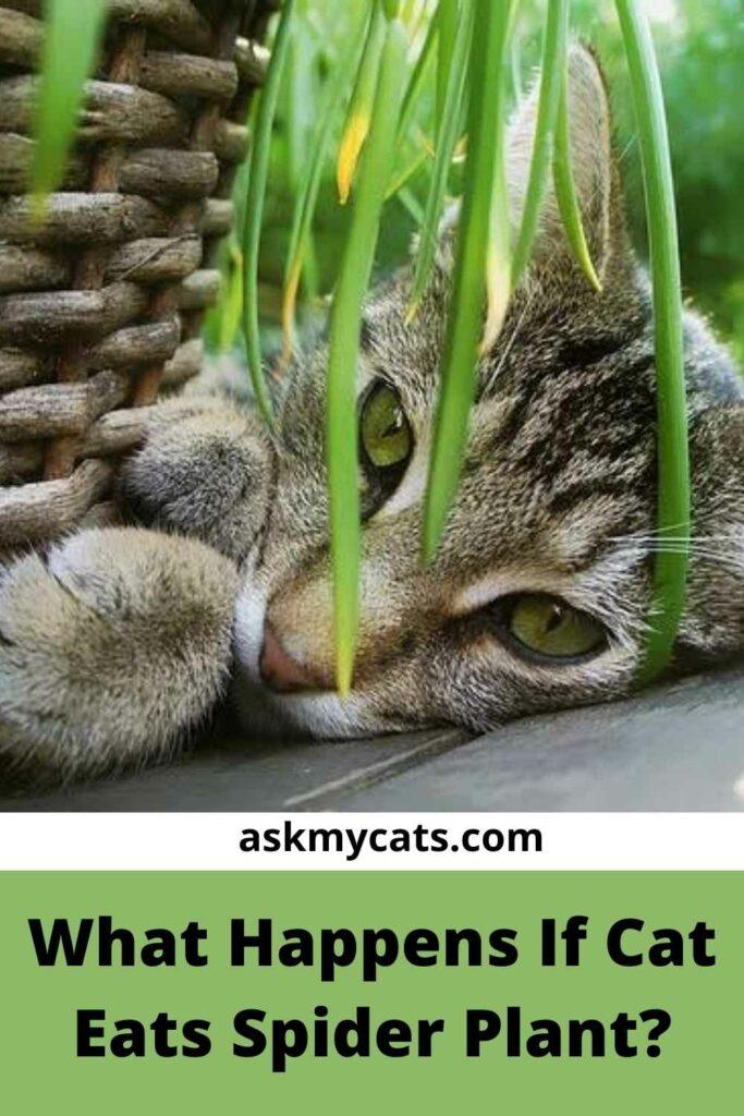 What Happens If Cat Eats Spider Plant?