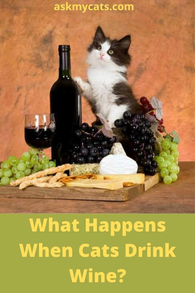 What Happens When Cats Drink Wine?