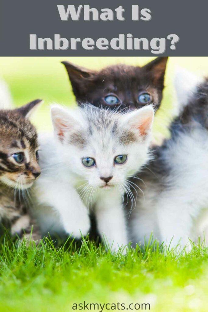 what is inbreeding?