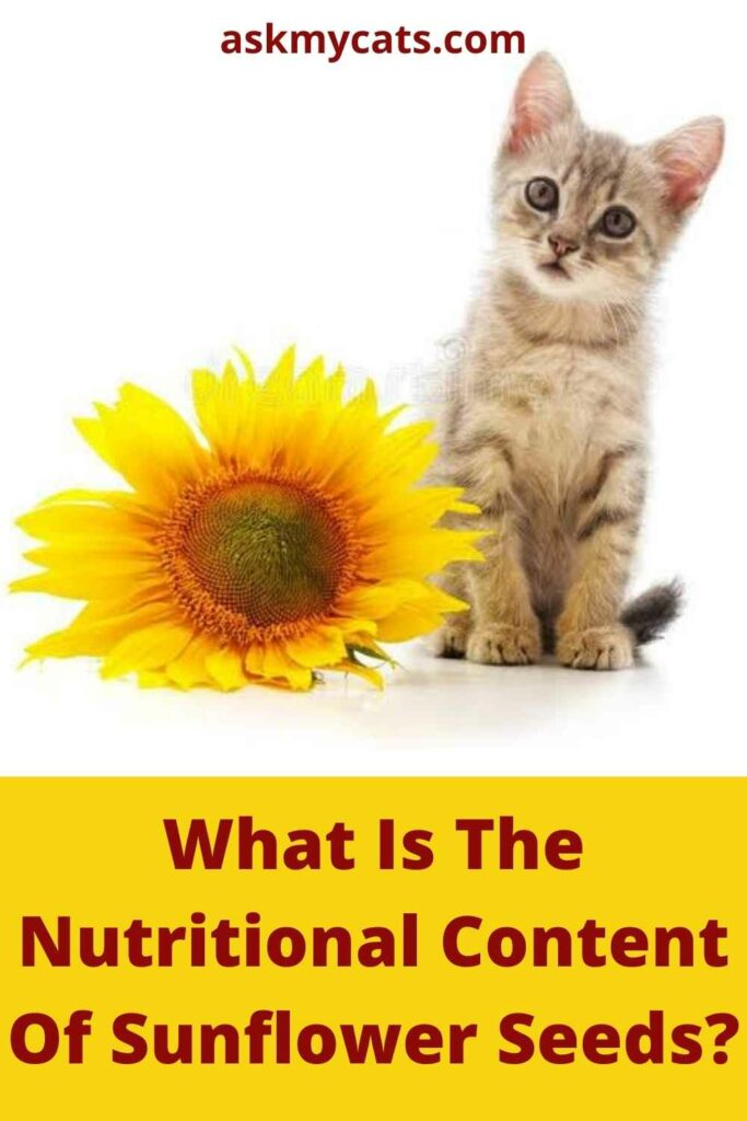 What Is The Nutritional Content Of Sunflower Seeds?