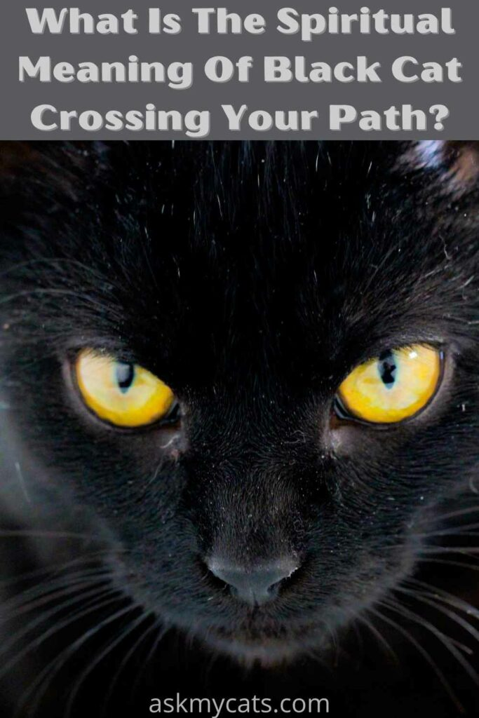 what is the meaning of black cat crossing your path
