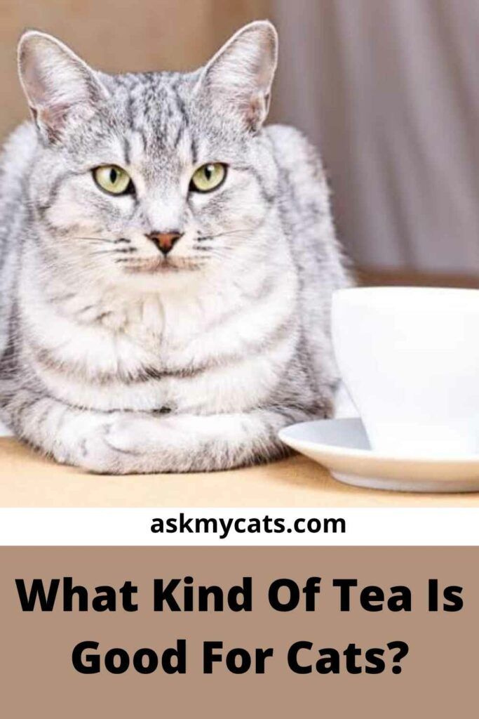 What Kind Of Tea Is Good For Cats?