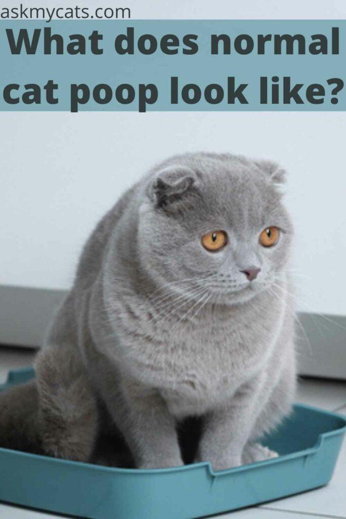 What does normal cat poop look like?
