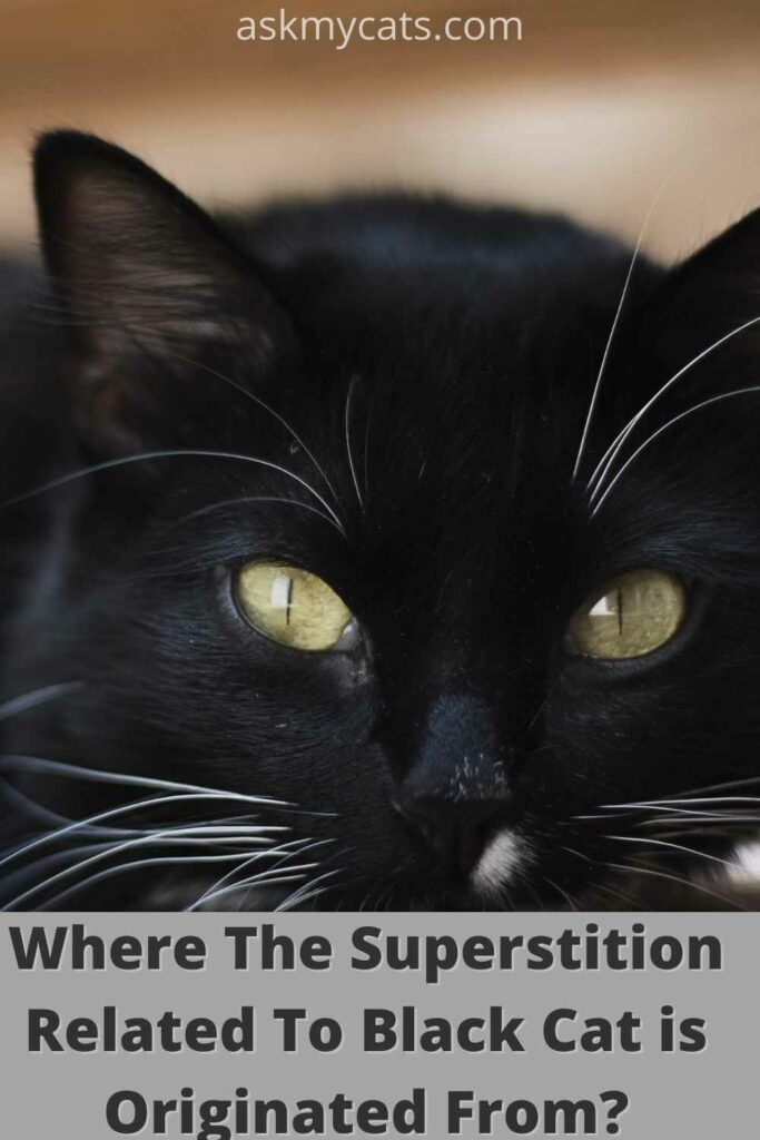 where the superstition related to black cats is originated from