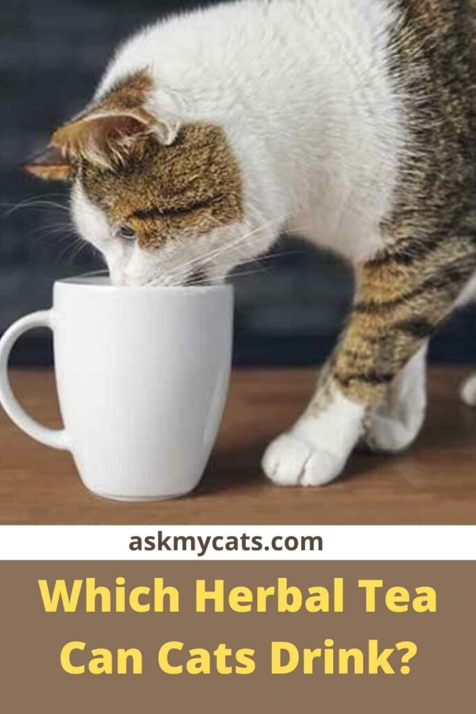 Which Herbal Tea Can Cats Drink?