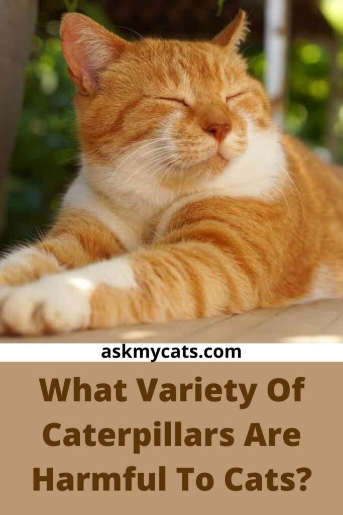 What Variety Of Caterpillars Are Harmful To Cats?