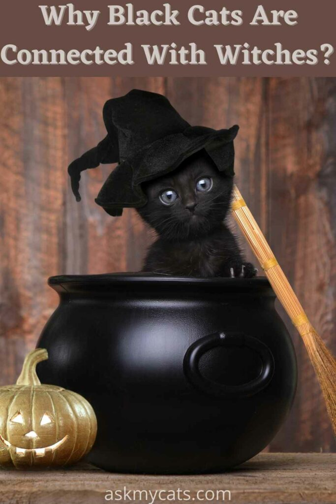 why black cats are connected with witches?