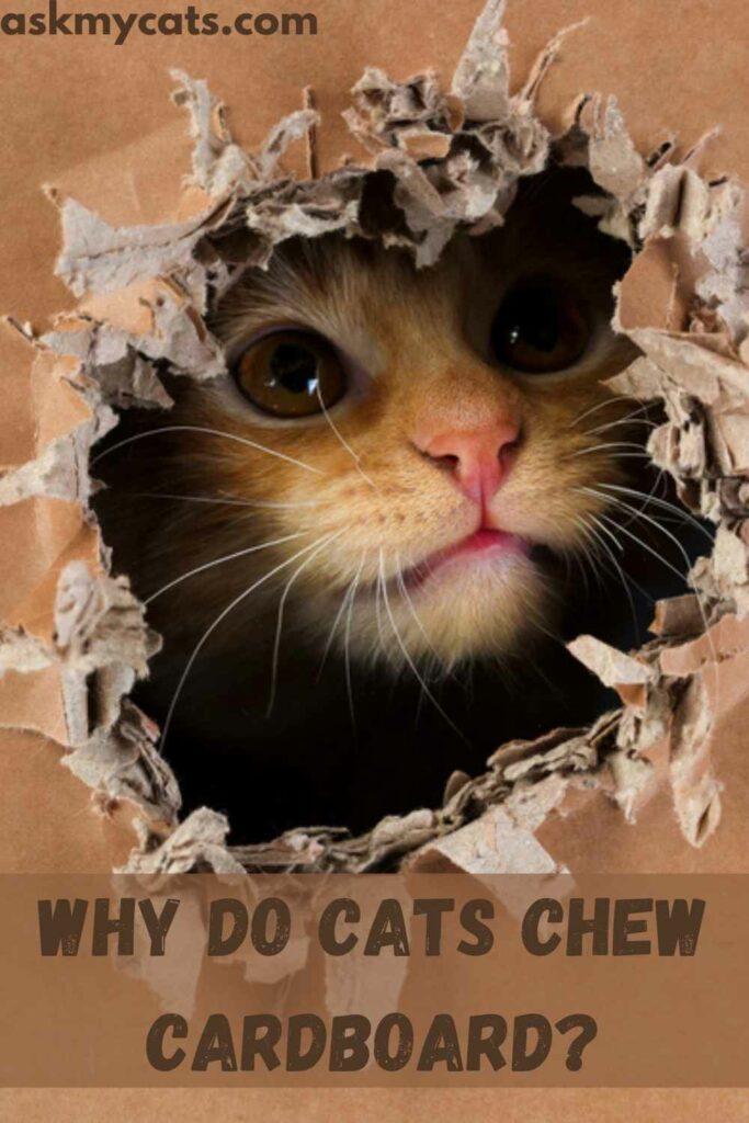 Why Do Cats Chew Cardboard?