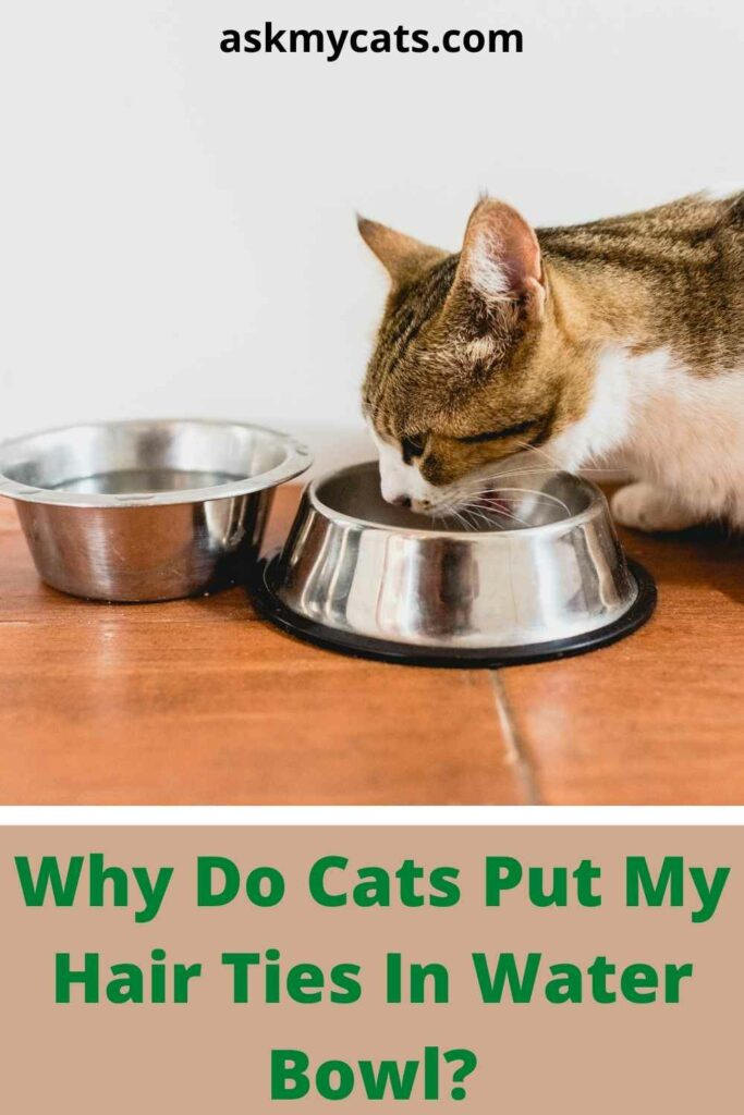 Why Do Cats Put My Hair Ties In Water Bowl?