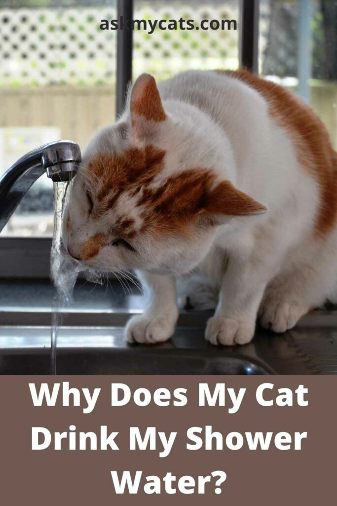 Why Does My Cat Drink My Shower Water?