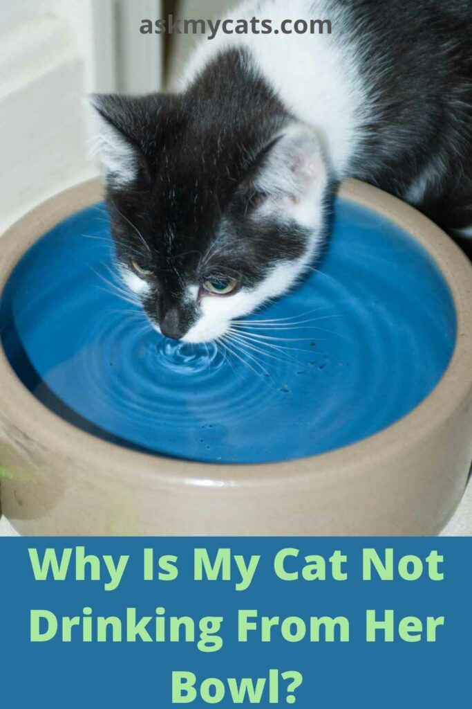 Why Is My Cat Not Drinking From His Bowl?