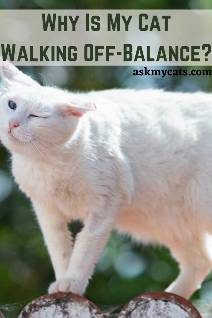 Why Is My Cat Walking Off-Balance?