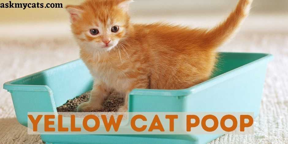 Yellow Cat Poop