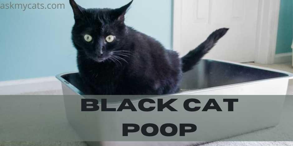Black Cat Poop