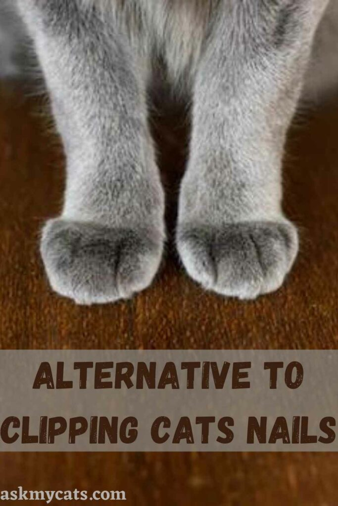 Alternative To Clipping Cats Nails