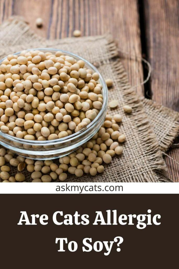Are Cats Allergic To Soy?