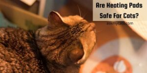 Are Heating Pads Safe For Cats? Do They Provide Enough Comfort?