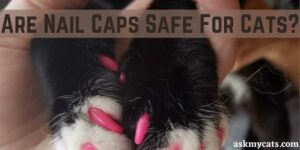 Are Nail Caps Safe For Cats? Cat Nail Caps Pros And Cons