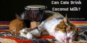Can Cats Drink Coconut Milk? Know Before Feeding Them!