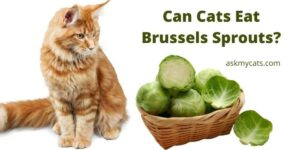 Can Cats Eat Brussels Sprouts?