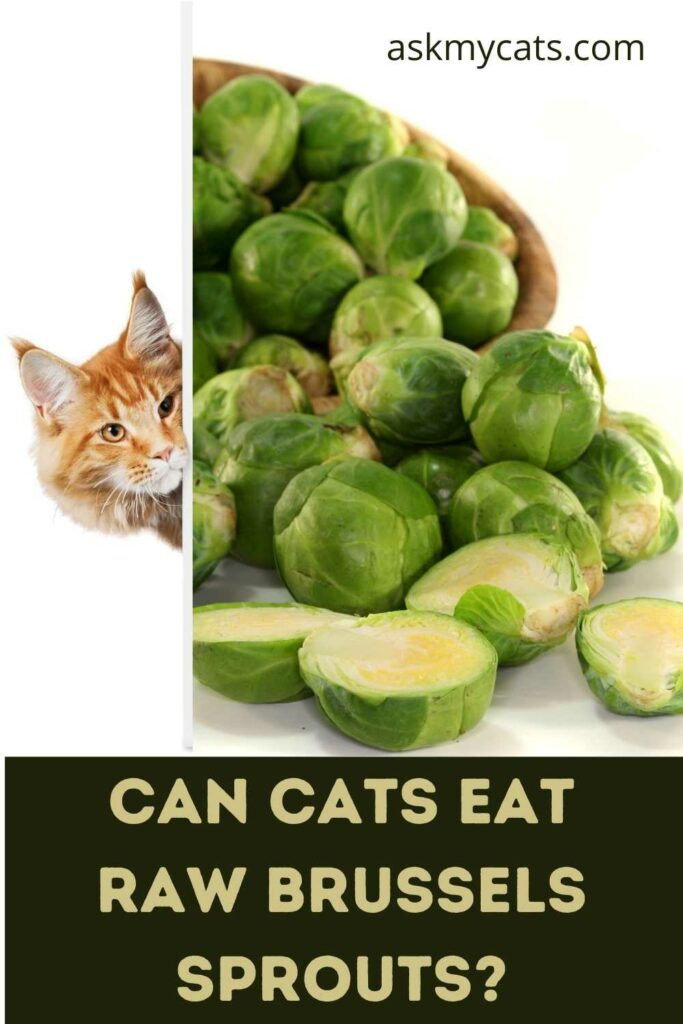 Can Cats Eat Raw Brussels Sprouts?