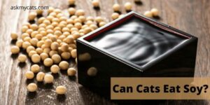 Can Cats Eat Soy? (Soy Milk, Soy Oil, Soybeans)
