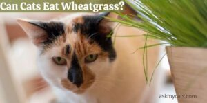 Can Cats Eat Wheatgrass? Know About The Side Effects Too!