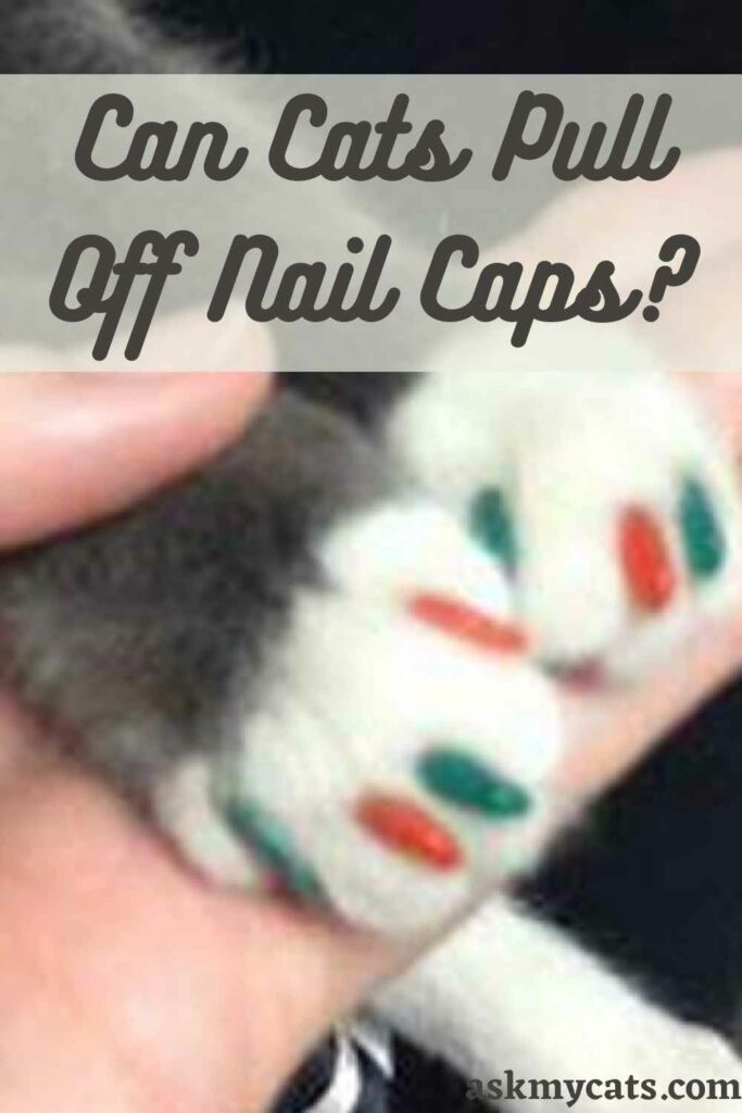 Can Cats Pull Off Nail Caps?