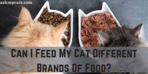 Can I Feed My Cat Different Brands Of Food?
