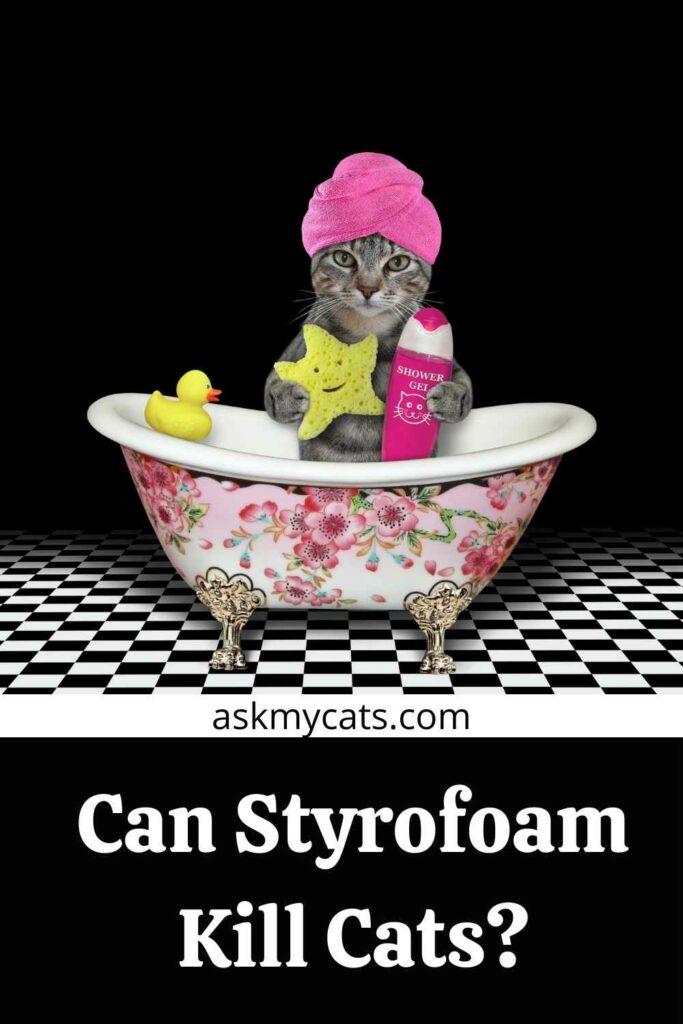Can Styrofoam Kill Cats?