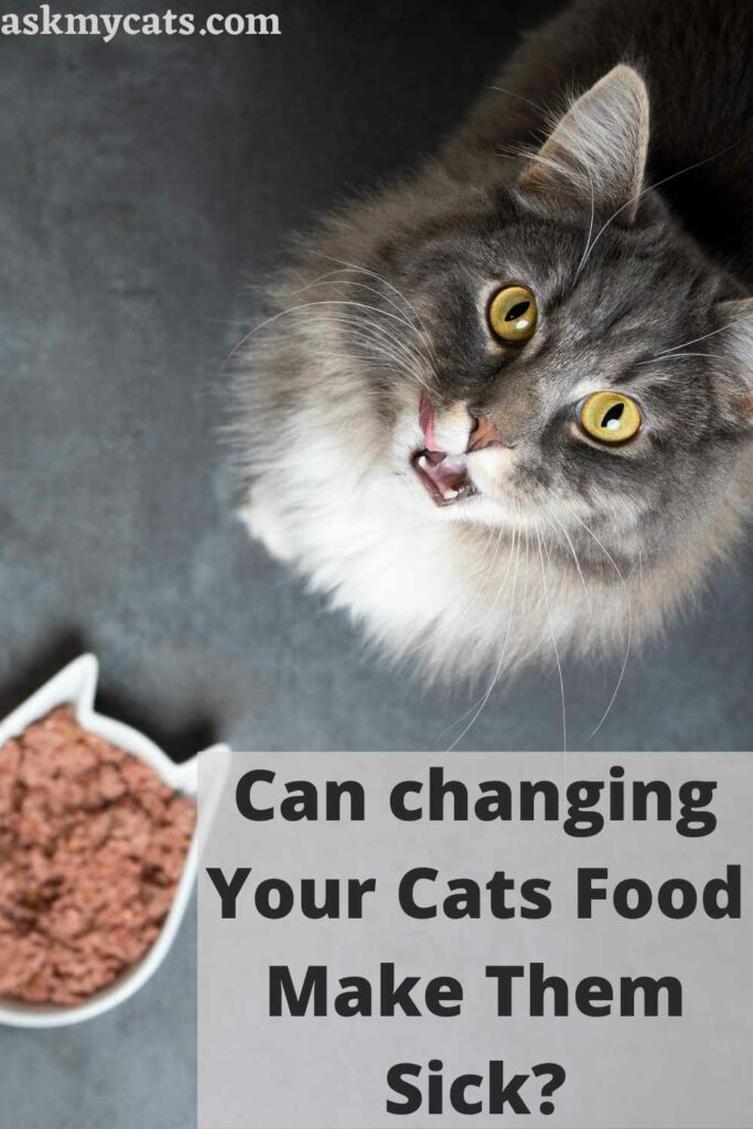 Can changing Your Cats Food Make Them Sick?