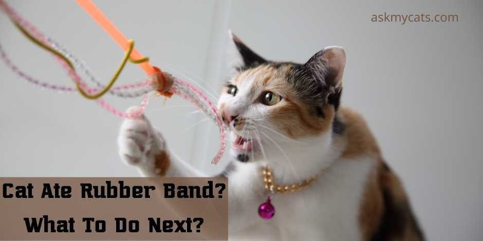 Cat Ate Rubber Band What To Do