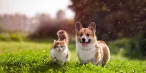 8 Tricks to Help Your Cat and Dog to Get Along