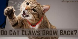 Do Cat Claws Grow Back? Is It Normal?