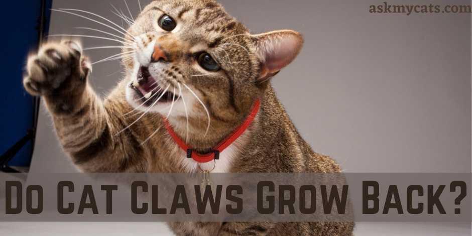 Do Cat Claws Grow Back?