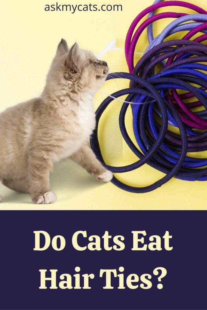Do Cats Eat Hair Ties?