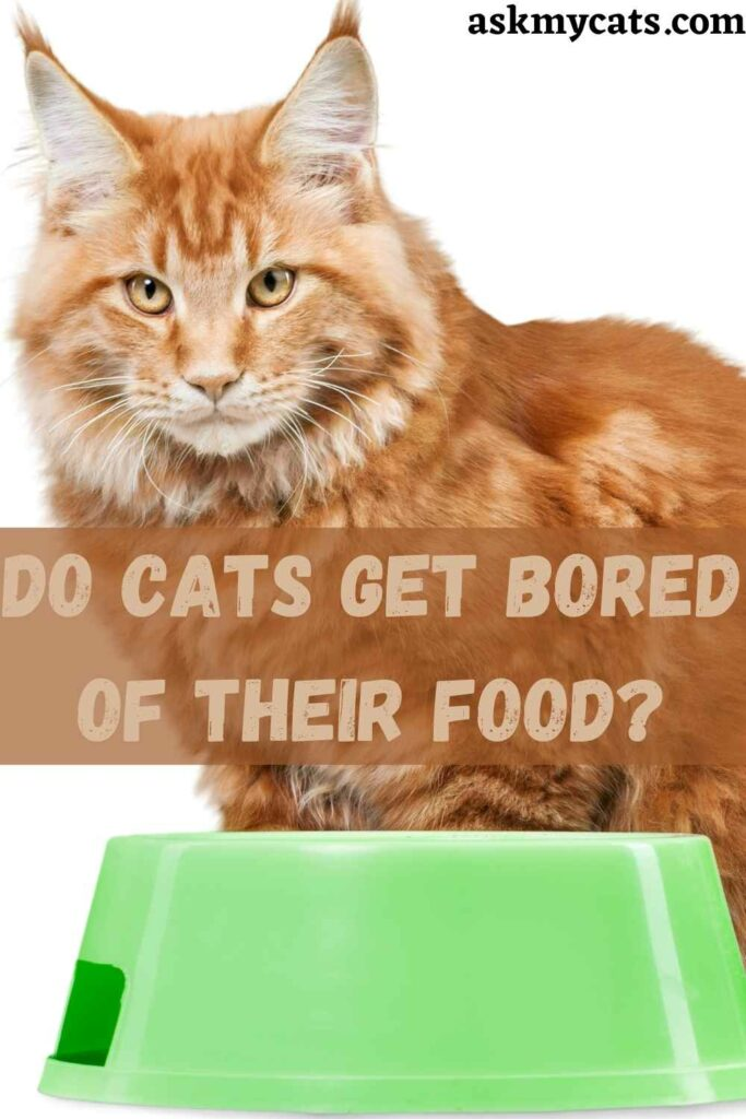 Do Cats Get Bored Of Their Food?