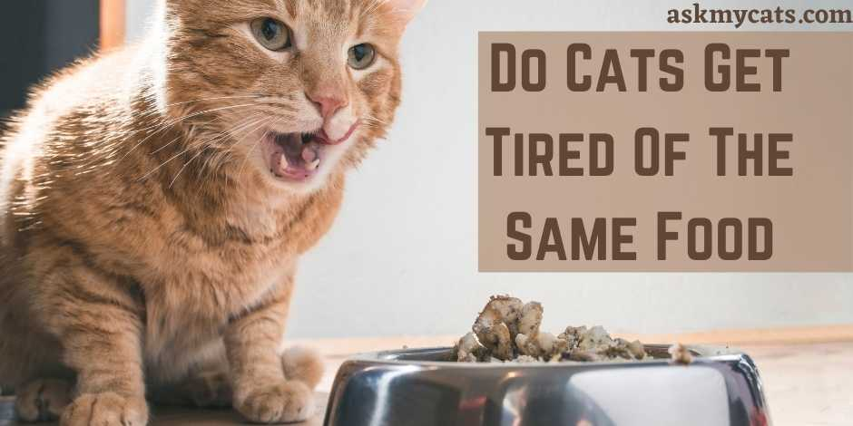 Do Cats Get Tired Of The Same Food