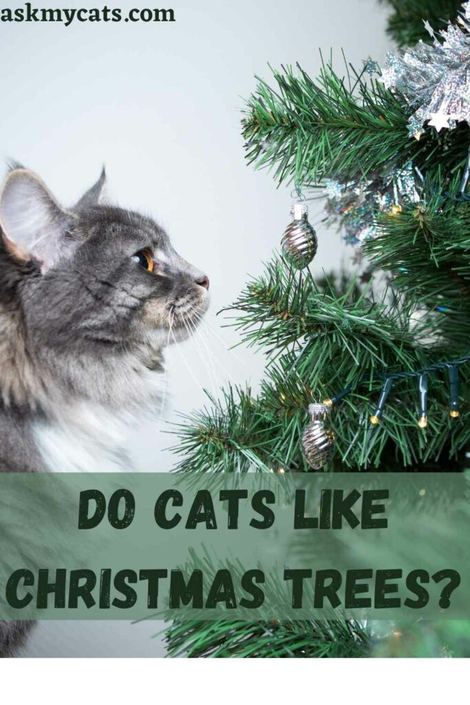 Do Cats Like Christmas Trees?