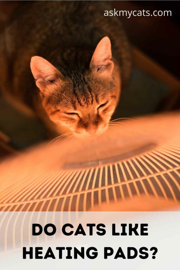 Do Cats Like Heating Pads?