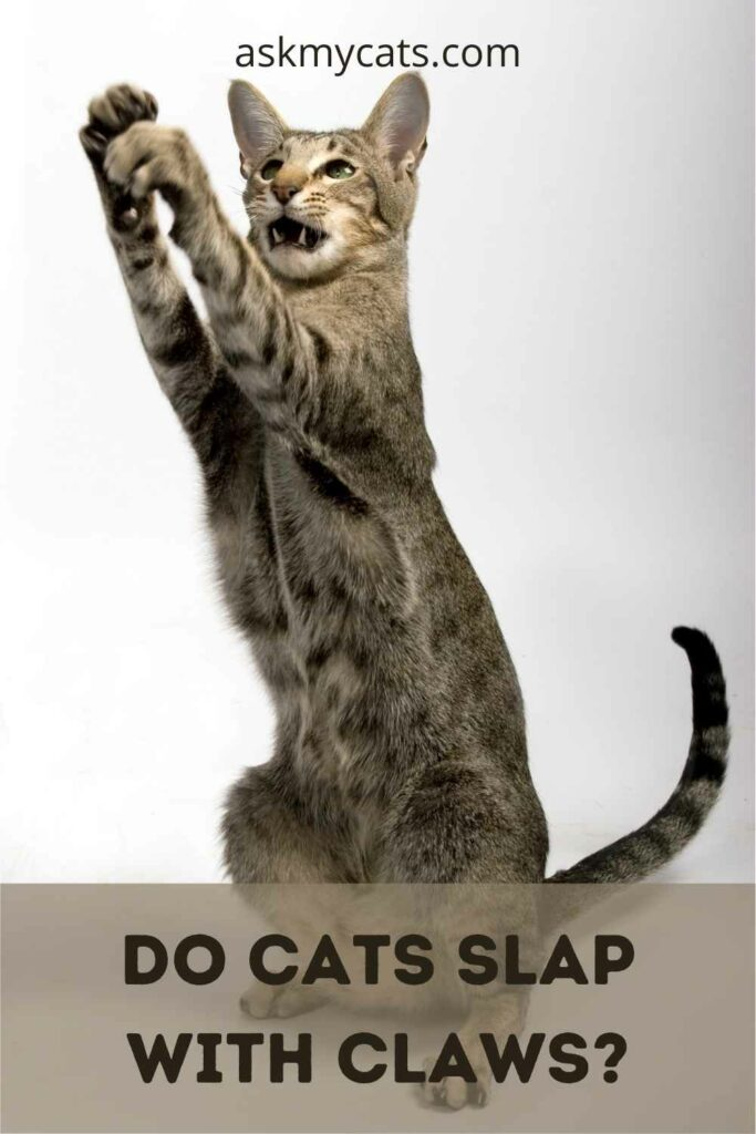 Do Cats Slap With Claws?