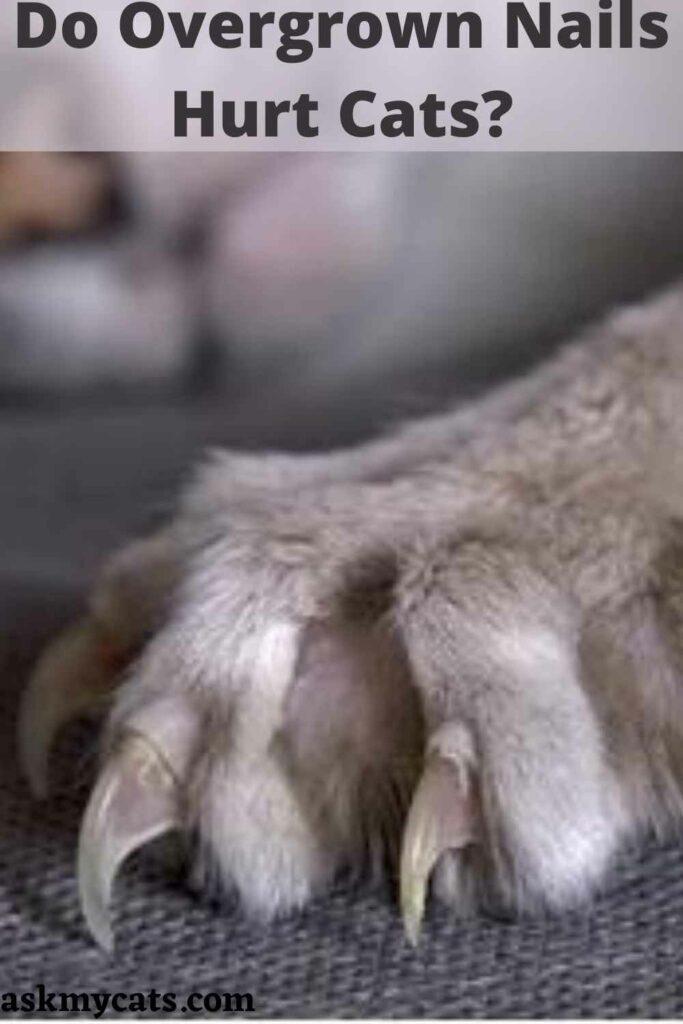 Do Overgrown Nails Hurt Cats?