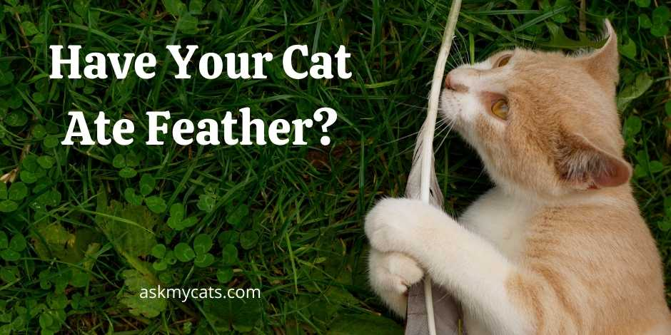 Have Your Cat Ate Feather