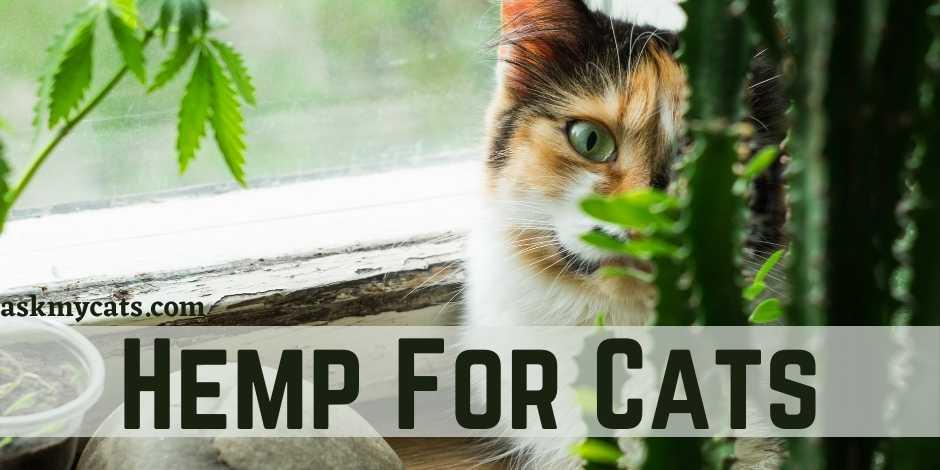 Hemp For Cats