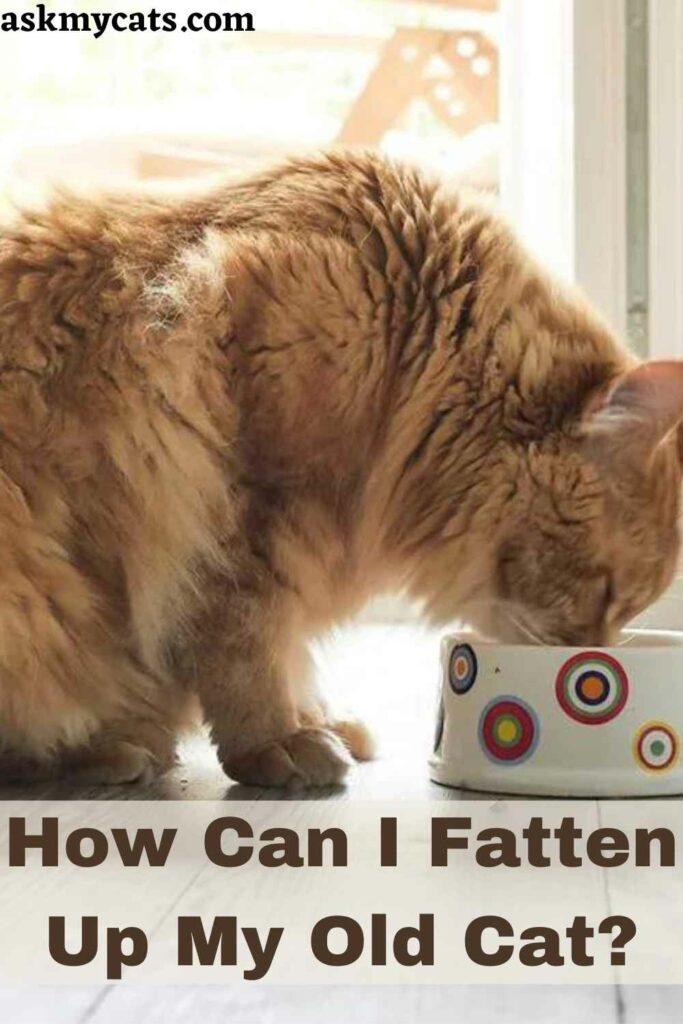 How Can I Fatten Up My Old Cat?