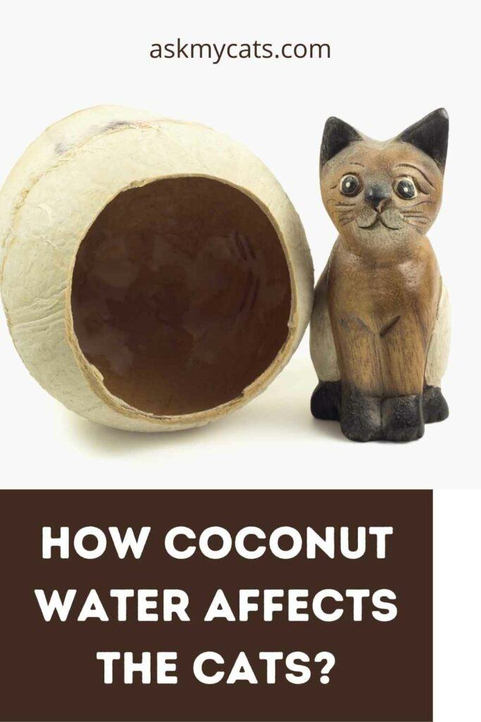 How Coconut Water Affects The Cats?