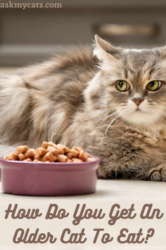 How Do You Get An Older Cat To Eat?