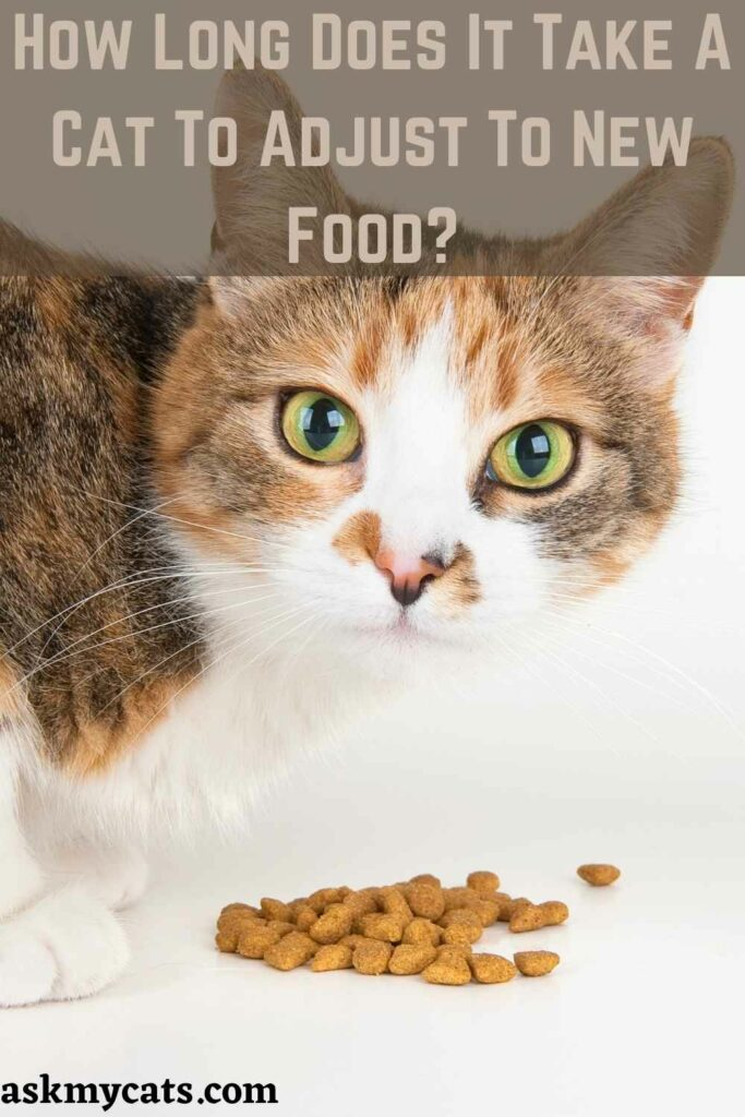 How Long Does It Take A Cat To Adjust To New Food?